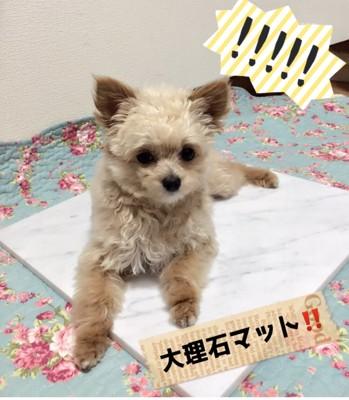 #大理石マットの上に犬#