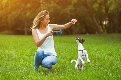 芝生の上で犬と遊ぶ女性