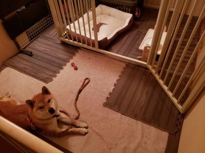 専用スペースにいる犬