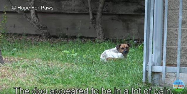 草地にうずくまる犬