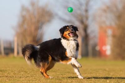 ボールをキャッチしようとしている犬