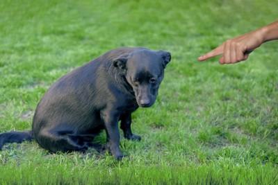 叱られて視線を外す犬