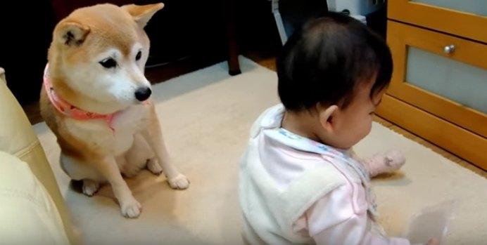 赤ちゃんを見つめる