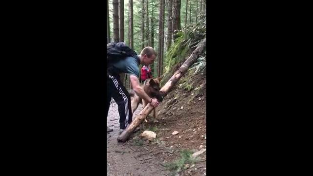 木に手を掛ける男性