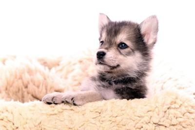 可愛らしい子犬