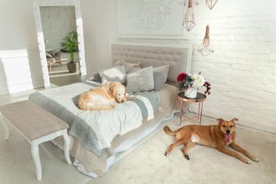 ベッドルームでくつろぐ2匹の犬