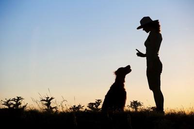 トレーニング中の飼い主さんと犬のシルエット