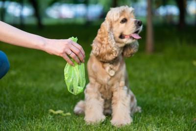 犬のウンチを処理する飼い主