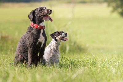 草むらの中で座る二頭の犬