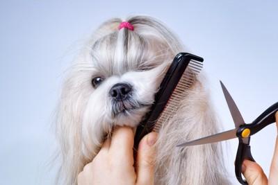 毛のカットをされている犬