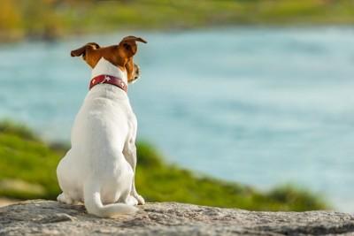 背中を向けている犬