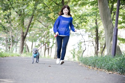 小走りでお散歩する女性と犬