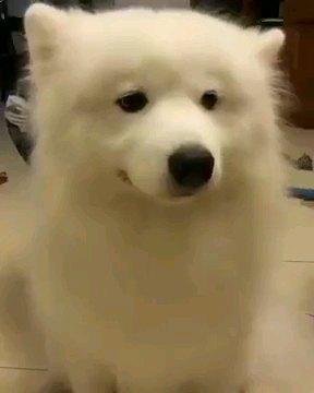 正面をみる犬