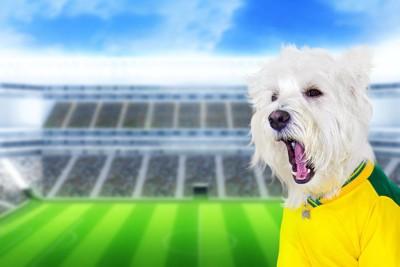 スタジアムとブラジルのユニフォームを着て口を開けた犬