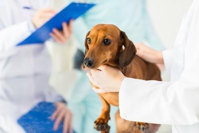 動物病院で緊張している犬