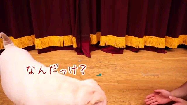 なんだっけ?~字幕