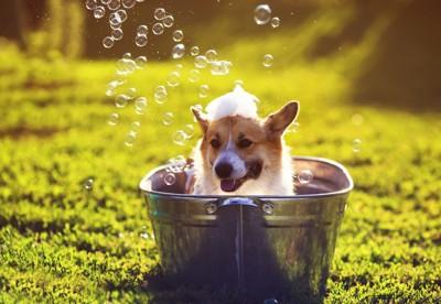 野外でシャンプーする犬