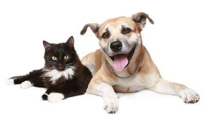 寄り添ってくつろぐ黒い猫と茶色い犬