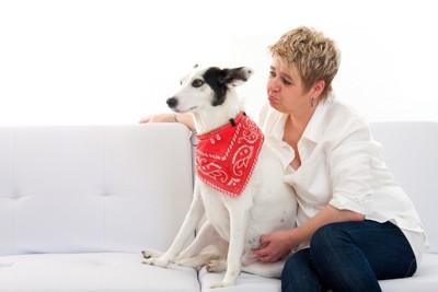 ソファで女性に背を向ける犬