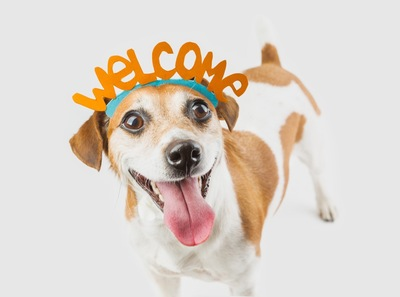 welcomeのカチューシャを着けた犬