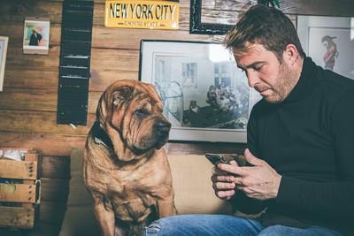携帯を操作している飼い主の様子を伺っている犬