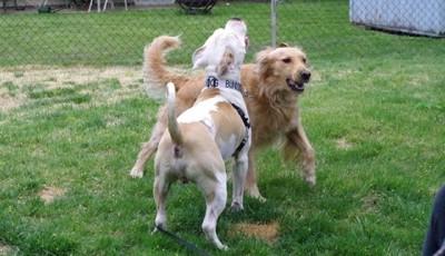 芝生の上で遊ぶ2頭の犬