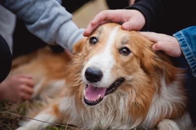 人に囲まれている犬