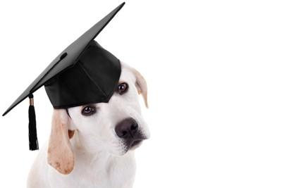 博士帽をかぶった犬