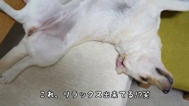 これ、~字幕