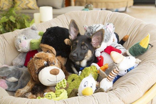 寝床にたくさんのおもちゃと犬