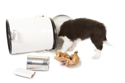 ゴミ箱をひっくり返した犬