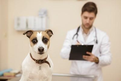 診察台で固まる犬