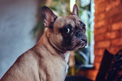 ちら見する犬
