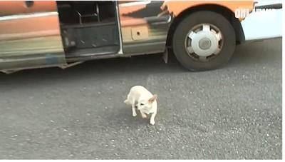 バスを降りる犬