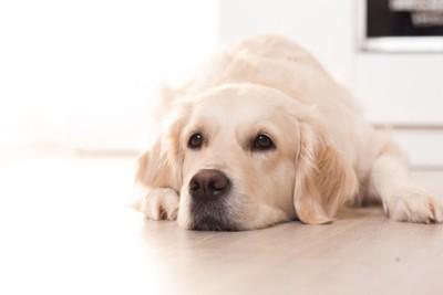 黄緑の包帯をした犬の足