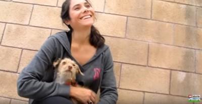 女性の膝の上の犬