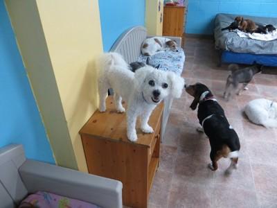 遊ぶ犬たち2