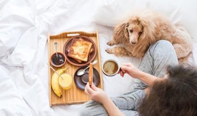 食事中の飼い主のそばでくつろぐ犬