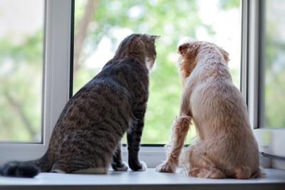 窓辺に座る犬と猫の後ろ姿