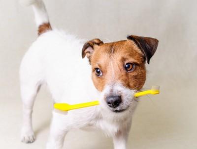 歯ブラシを咥える犬