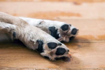 2本の犬の足