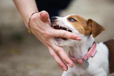 人の手を噛む犬