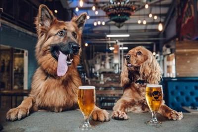 2頭の犬とビール