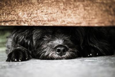 隠れる黒い犬
