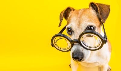 眼鏡をかけて考えている犬