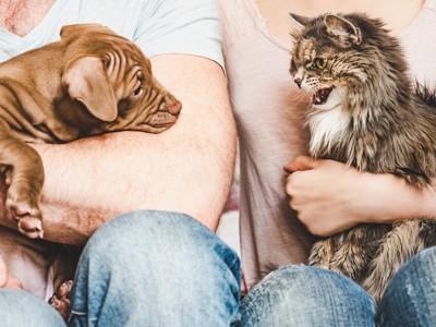膝にのる犬と猫