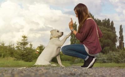 女性の手を追ってお手をする犬