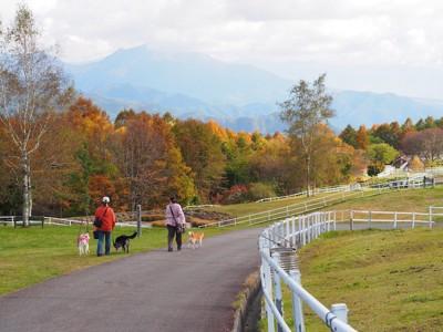 紅葉とお散歩中の人と犬