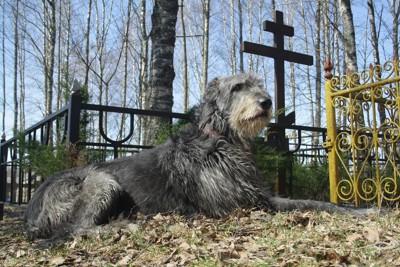 お墓の前に座り込む犬