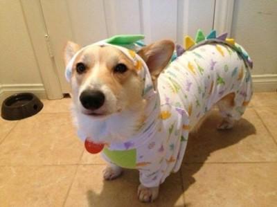 コーギー?恐竜のパジャマ